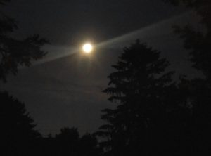 Framed by the trees in the yard, the strawberry moon brightly shines in the sky above me. (Photo by A. Keith Carreiro, June 2016.)